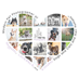 Modern Pet Photographer of Huggable, Loveable, and Kissable Dogs and Cats and their Humans in the Ann Arbor and Detroit, Michigan Area -